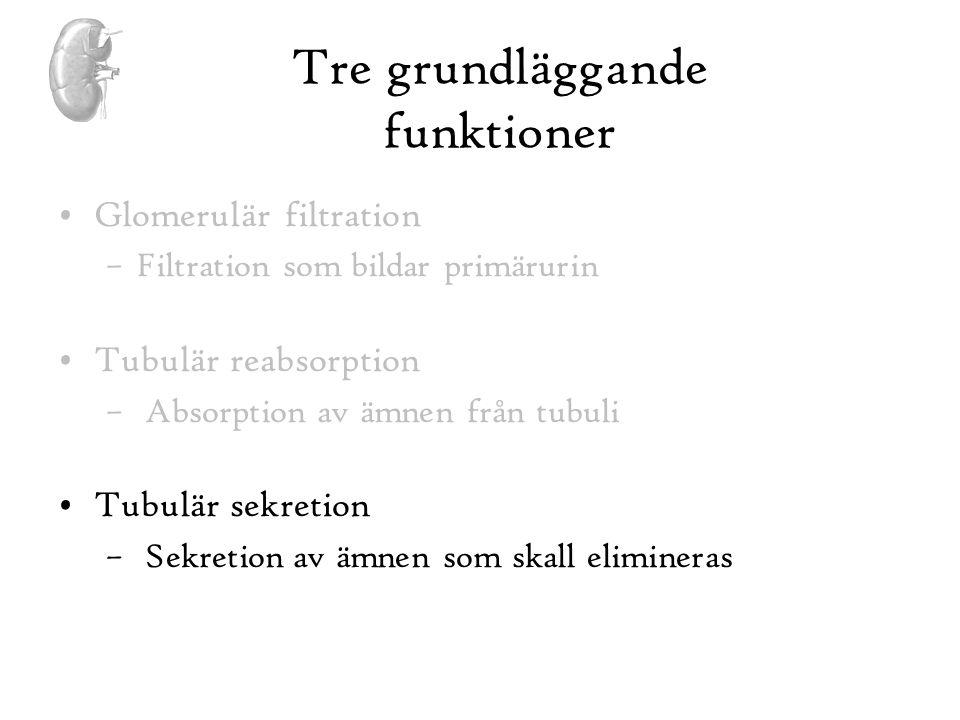 Tre grundläggande funktioner •Glomerulär filtration –Filtration som bildar primärurin •Tubulär reabsorption – Absorption av ämnen från tubuli •Tubulär