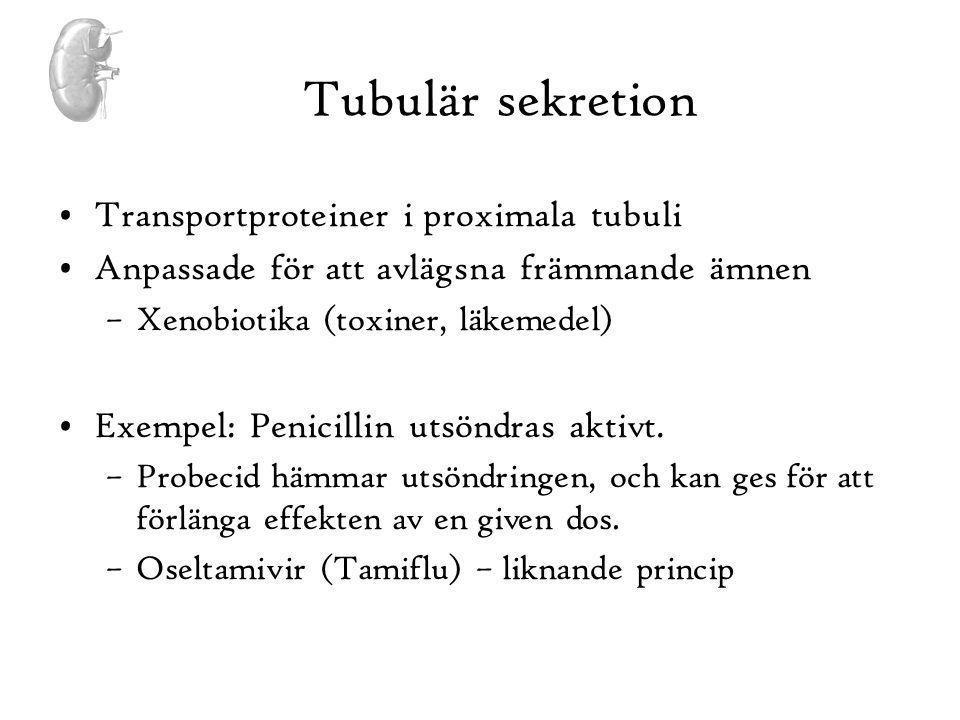 Tubulär sekretion •Transportproteiner i proximala tubuli •Anpassade för att avlägsna främmande ämnen –Xenobiotika (toxiner, läkemedel) •Exempel: Penic