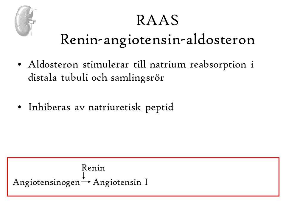 •Aldosteron stimulerar till natrium reabsorption i distala tubuli och samlingsrör •Inhiberas av natriuretisk peptid Angiotensinogen Angiotensin I Reni