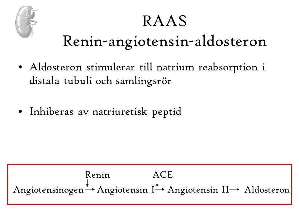 RAAS Renin-angiotensin-aldosteron •Aldosteron stimulerar till natrium reabsorption i distala tubuli och samlingsrör •Inhiberas av natriuretisk peptid