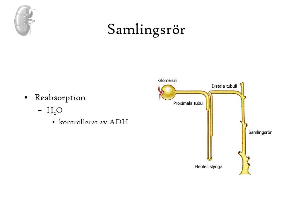 Samlingsrör •Reabsorption –H 2 O •kontrollerat av ADH