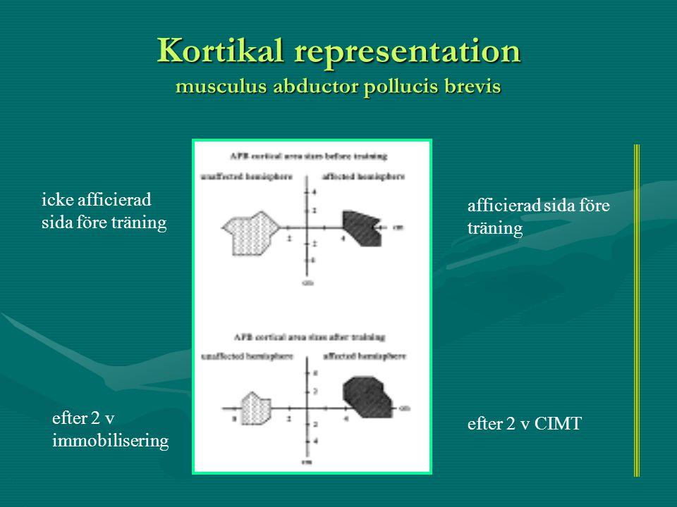 Kortikal representation musculus abductor pollucis brevis icke afficierad sida före träning afficierad sida före träning efter 2 v immobilisering efte