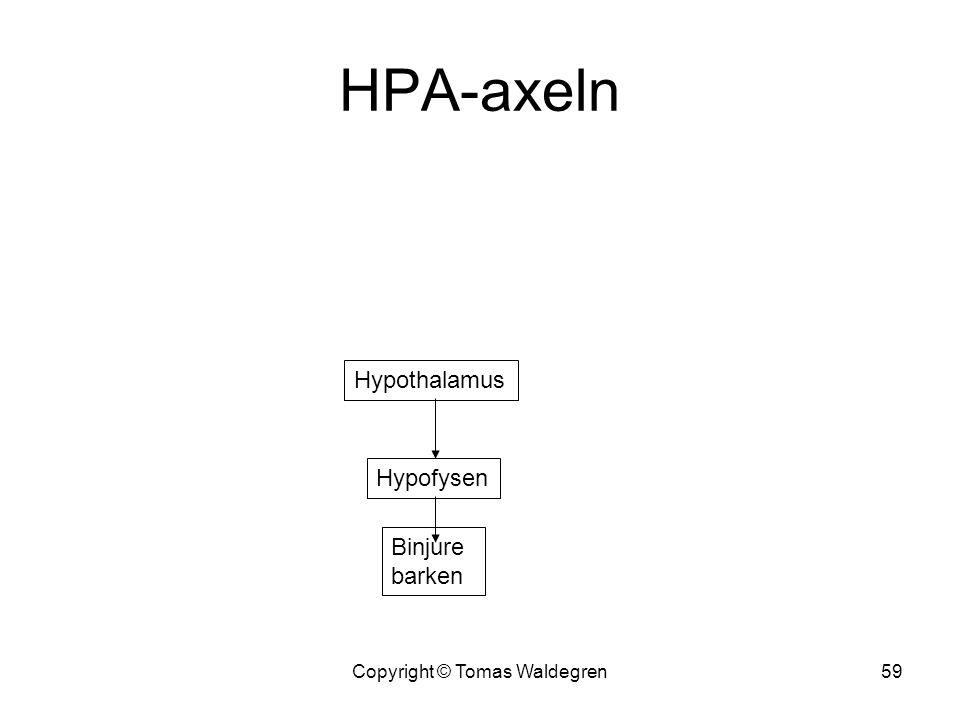 HPA-axeln Copyright © Tomas Waldegren59 Hypothalamus Hypofysen Binjure barken