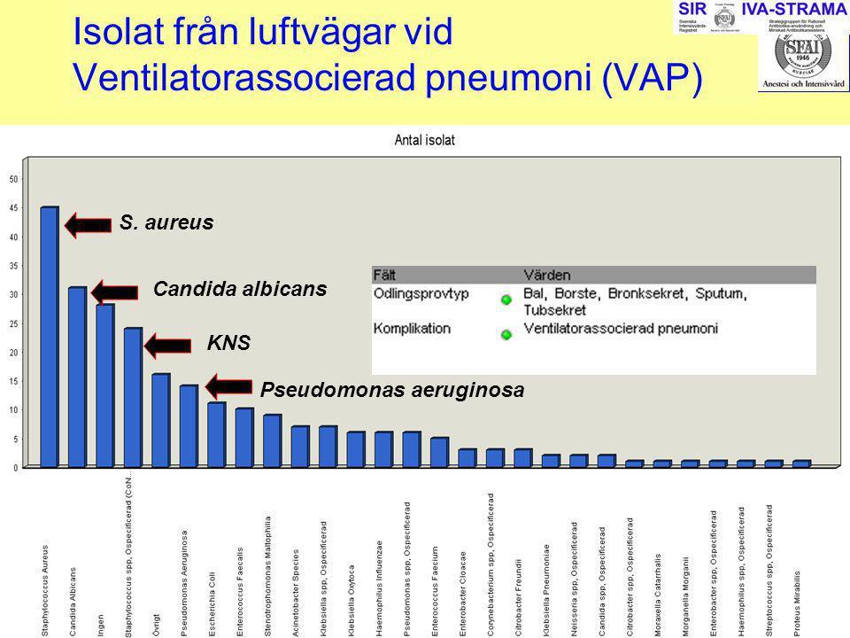 2007-03-15--16SIR241 Isolat från luftvägar vid Ventilatorassocierad pneumoni (VAP) S. aureus Candida albicans Pseudomonas aeruginosa KNS