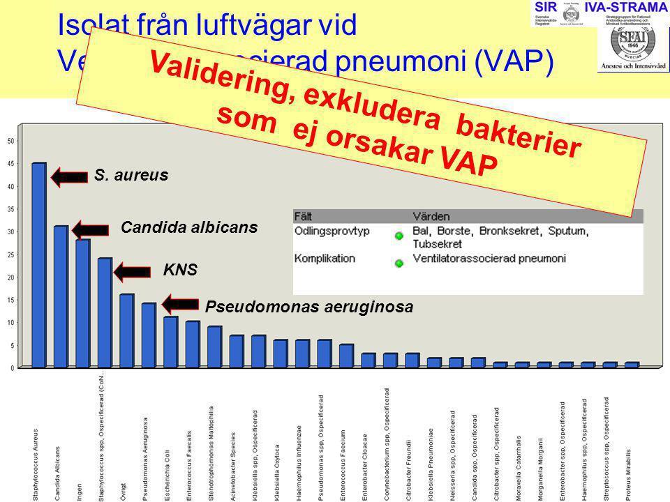 2007-03-15--16SIR242 Isolat från luftvägar vid Ventilatorassocierad pneumoni (VAP) S. aureus Candida albicans Pseudomonas aeruginosa KNS Validering, e