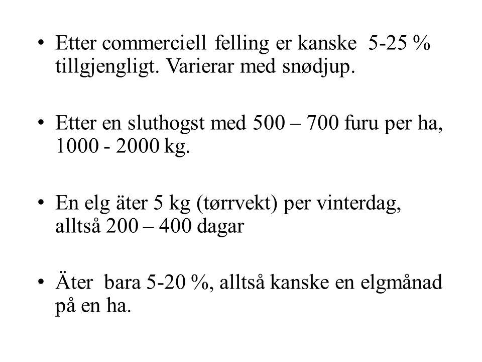 • Etter commerciell felling er kanske 5-25 % tillgjengligt. Varierar med snødjup. • Etter en sluthogst med 500 – 700 furu per ha, 1000 - 2000 kg. • En
