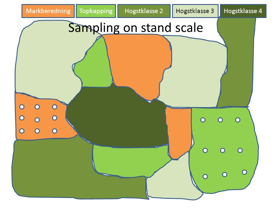 Markberedning TopkappingHogstklasse 2Hogstklasse 3Hogstklasse 4 Sampling on stand scale