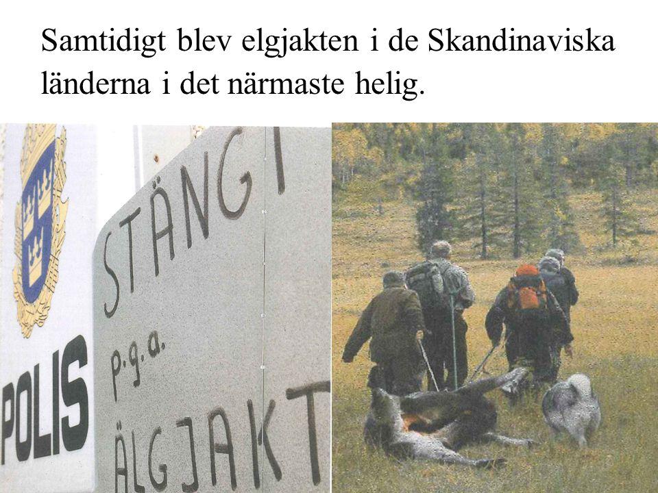 Samtidigt blev elgjakten i de Skandinaviska länderna i det närmaste helig.
