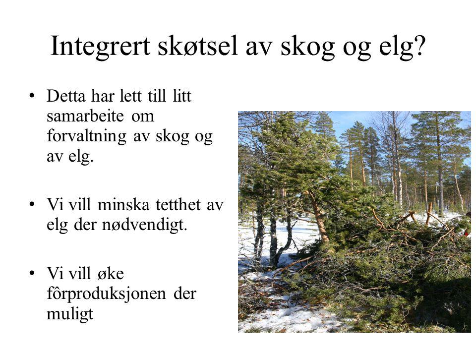 Integrert skøtsel av skog og elg? • Detta har lett till litt samarbeite om forvaltning av skog og av elg. • Vi vill minska tetthet av elg der nødvendi