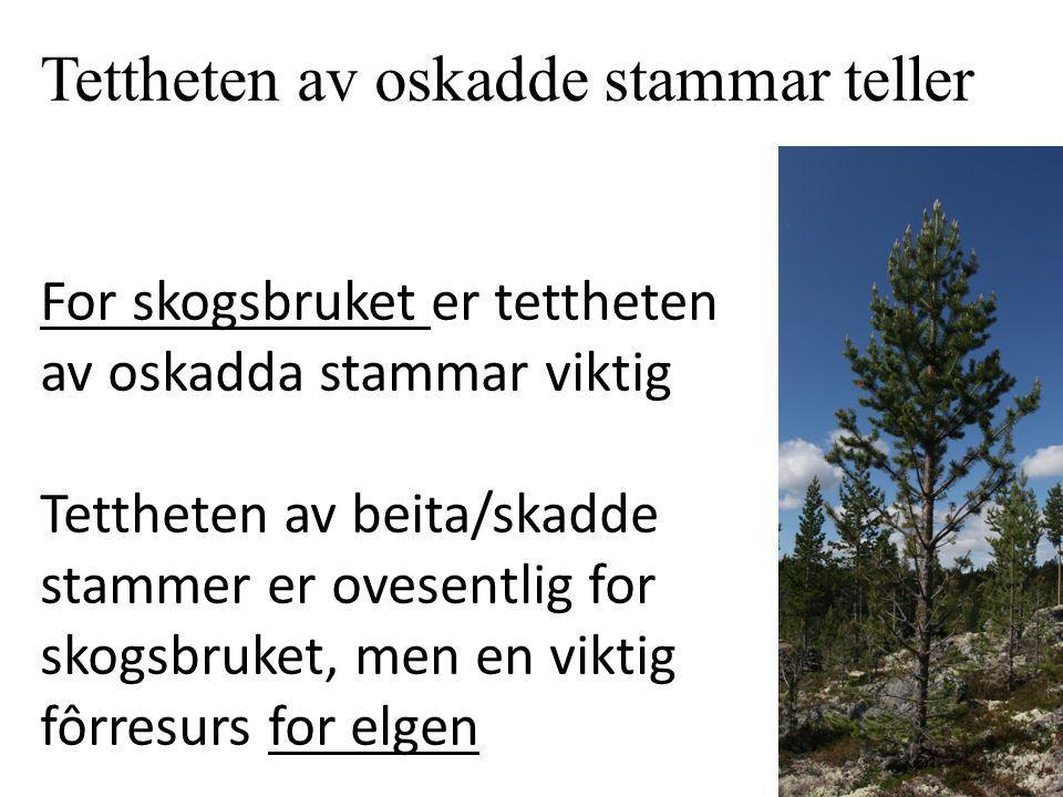 Tettheten av oskadde stammar teller For skogsbruket er tettheten av oskadda stammar viktig Tettheten av beita/skadde stammer er ovesentlig for skogsbr