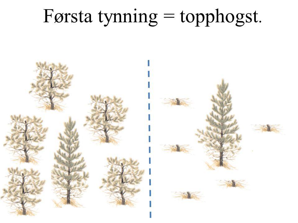 Återbetet utnyttjas också vid täta föryngringar Tetthet oskadd fur (N/ha) Tetthet totalt furu (N/ha)