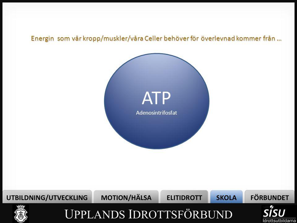 Energin som vår kropp/muskler/våra Celler behöver för överlevnad kommer från … ATP Adenosintrifosfat