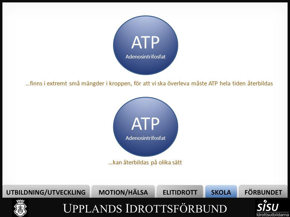 …finns i extremt små mängder i kroppen, för att vi ska överleva måste ATP hela tiden återbildas ATP Adenosintrifosfat ATP Adenosintrifosfat …kan återb