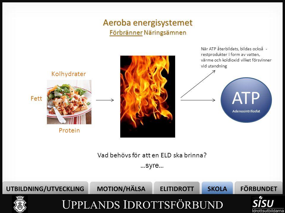 Aeroba energisystemet Förbränner Näringsämnen Vad behövs för att en ELD ska brinna? … syre … ATP Adenosintrifosfat Kolhydrater Fett Protein När ATP åt