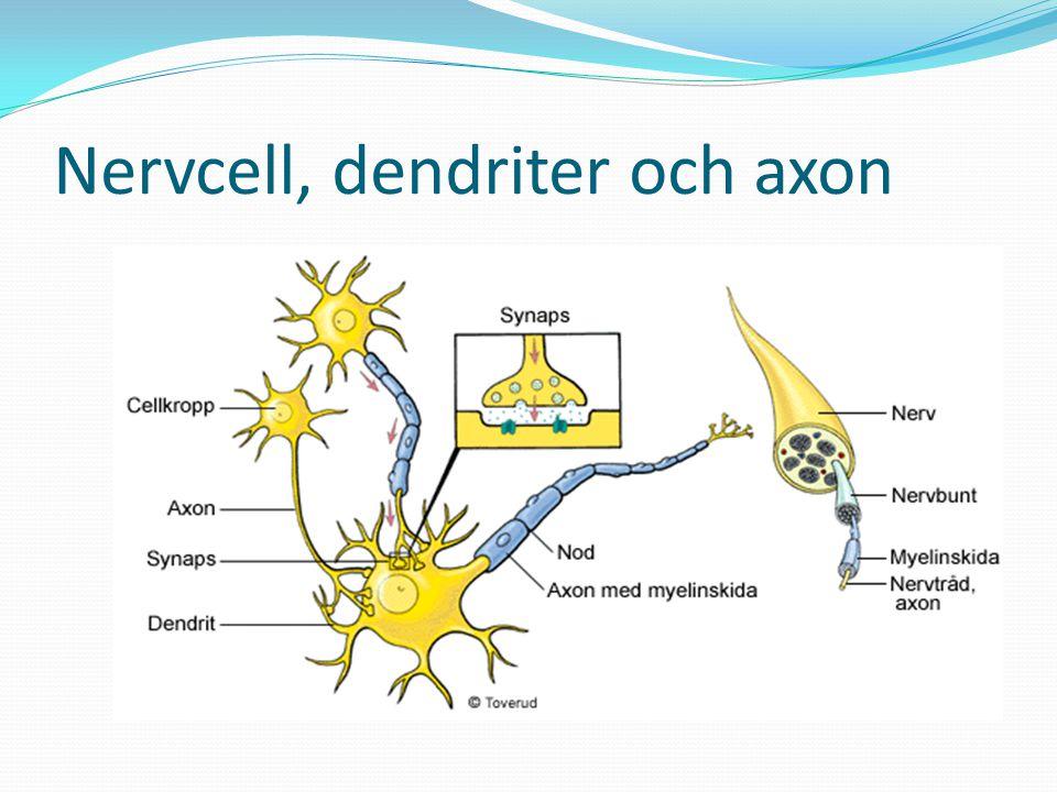Kemisk & Biologisk - sensationssökare Vissa människor kräver mycket stimulans & spänning för att känna lust, s.k.