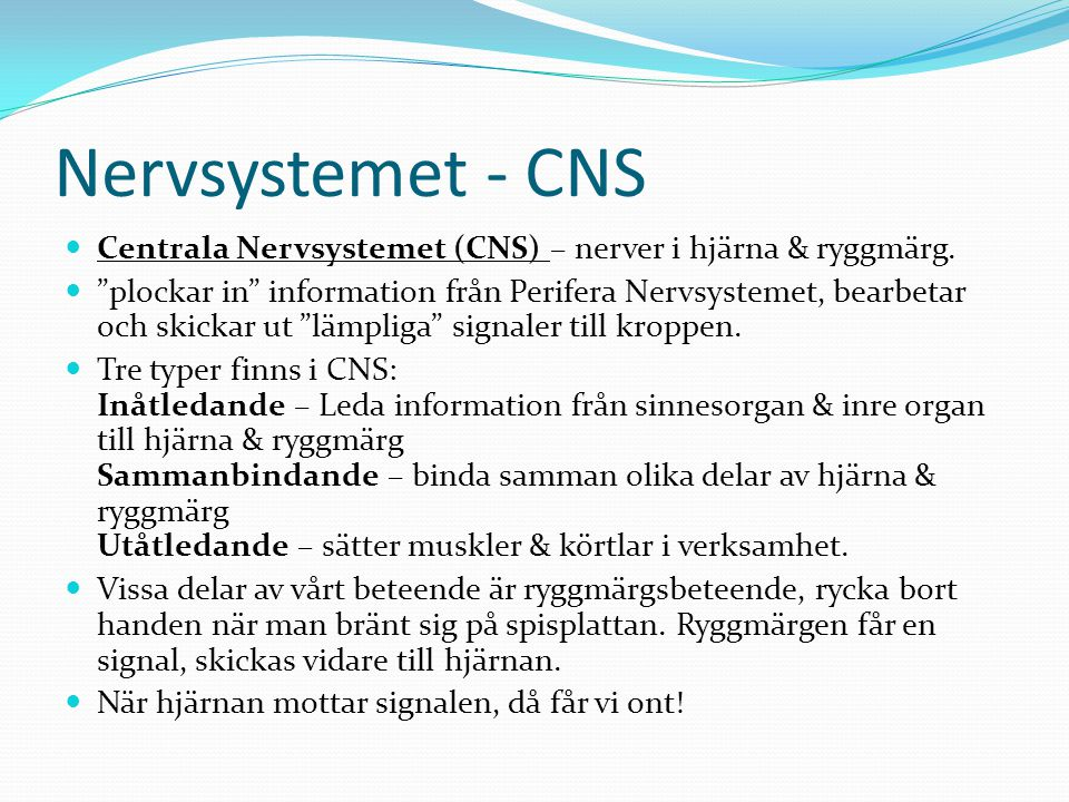 Nervsystemet - CNS Centrala Nervsystemet (CNS) – nerver i hjärna & ryggmärg.