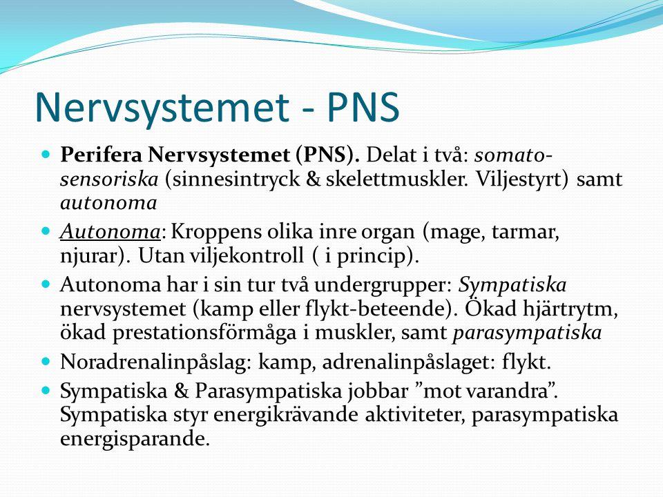 Nervsystem - Parasympatiska Del två i autonoma: Parasympatiska nervsystemet.