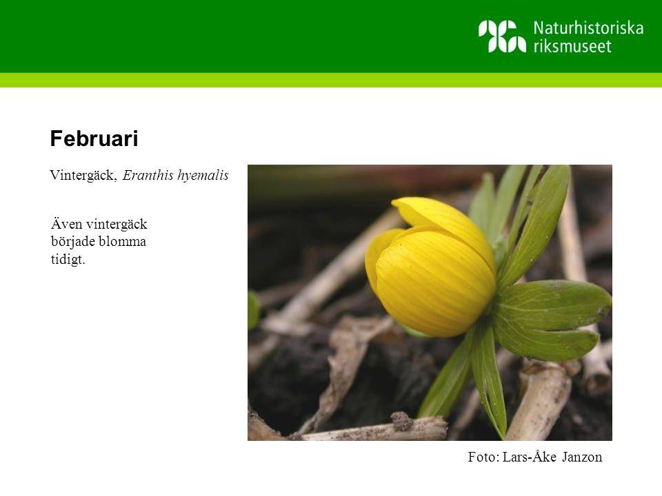 Juli Invasiva arter är främmande arter som kan påverka oss och våra inhemska arter negativt.