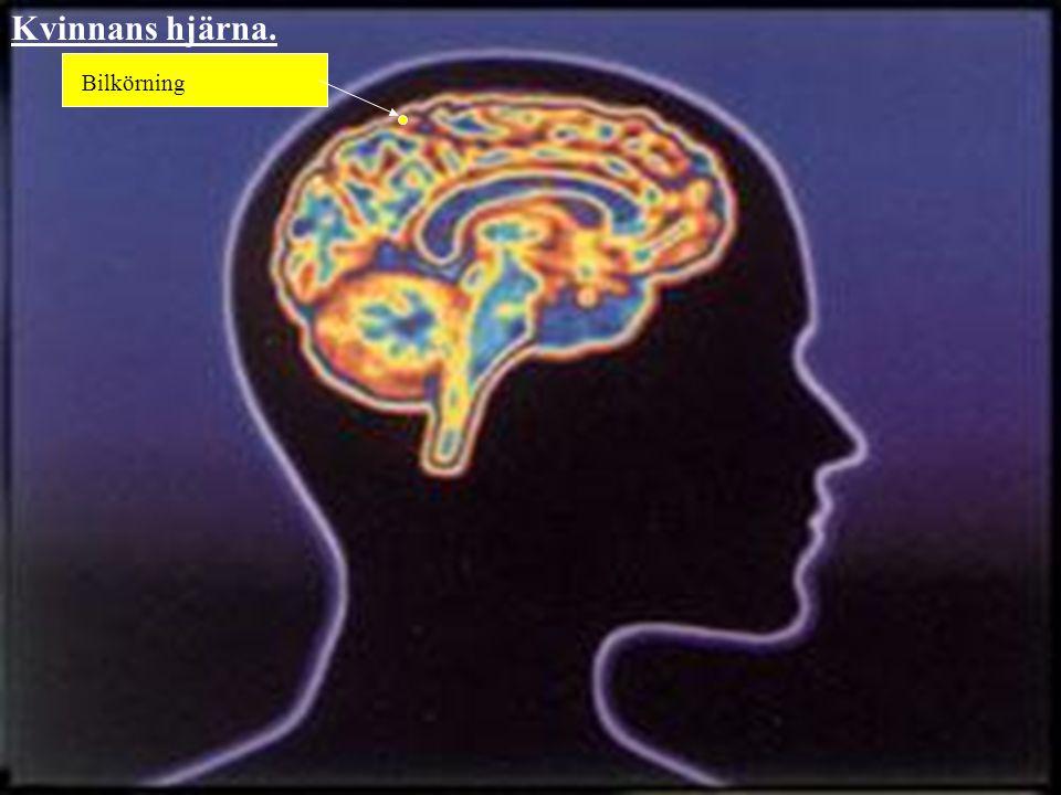 Kvinnans hjärna. Detta är ett resultat av intensiva och seriösa undersökningar för att bättre förstå den feminina hjärnan och dess indelningar, för at