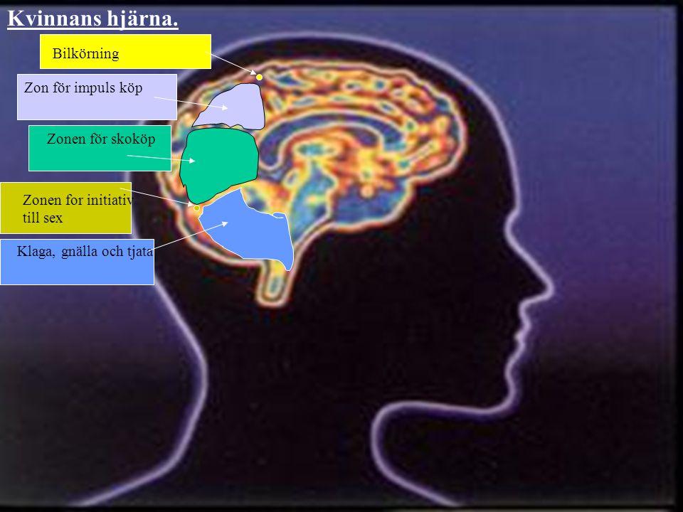 Zonen för skoköp Zon för impuls köp Bilkörning Zonen för initiativ till sex Kvinnans hjärna.