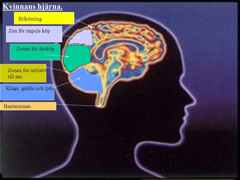 Bantarzonen Zonen for initiativ till sex Klaga, gnälla och tjata Zonen för skoköp Zon för impuls köp Bilkörning Kvinnans hjärna.