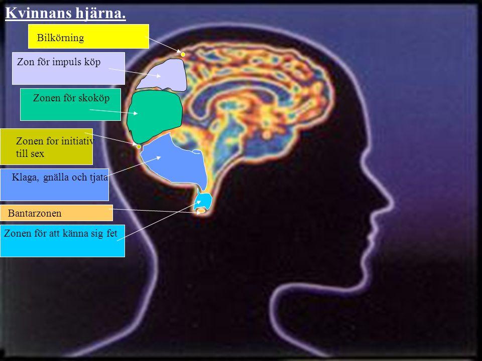 Zonen för att känna sig fet Bantarzonen Zonen for initiativ till sex Klaga, gnälla och tjata Zonen för skoköp Zon för impuls köp Bilkörning Kvinnans hjärna.