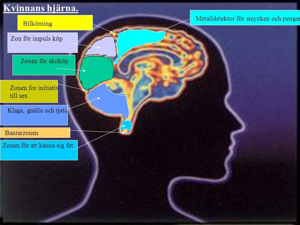 Metalldetektor för smycken och pengar Zonen för att känna sig fet Bantarzonen Zonen for initiativ till sex Klaga, gnälla och tjata Zonen för skoköp Zon för impuls köp Bilkörning Kvinnans hjärna.