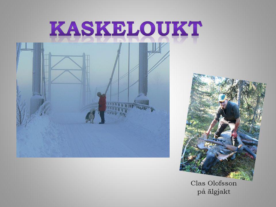 Clas Olofsson på älgjakt
