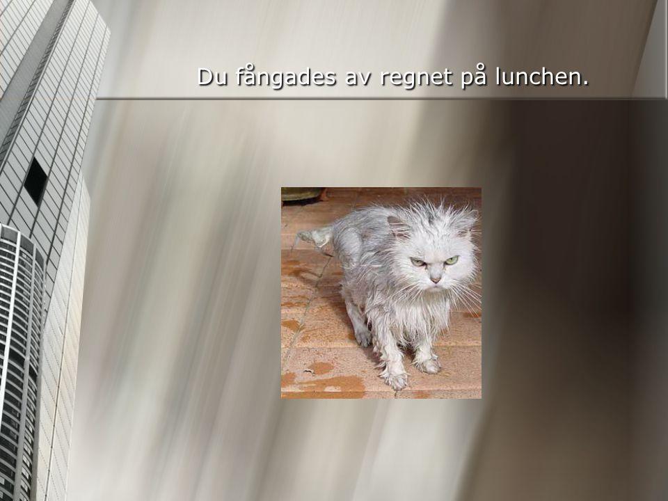Du fångades av regnet på lunchen.
