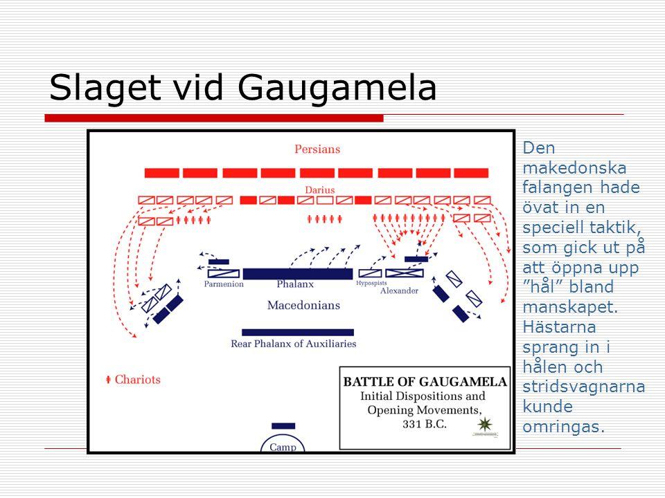 """Slaget vid Gaugamela Den makedonska falangen hade övat in en speciell taktik, som gick ut på att öppna upp """"hål"""" bland manskapet. Hästarna sprang in i"""