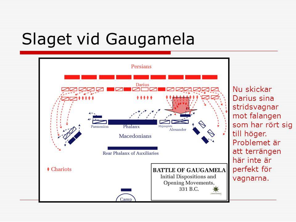 Slaget vid Gaugamela Nu skickar Darius sina stridsvagnar mot falangen som har rört sig till höger. Problemet är att terrängen här inte är perfekt för