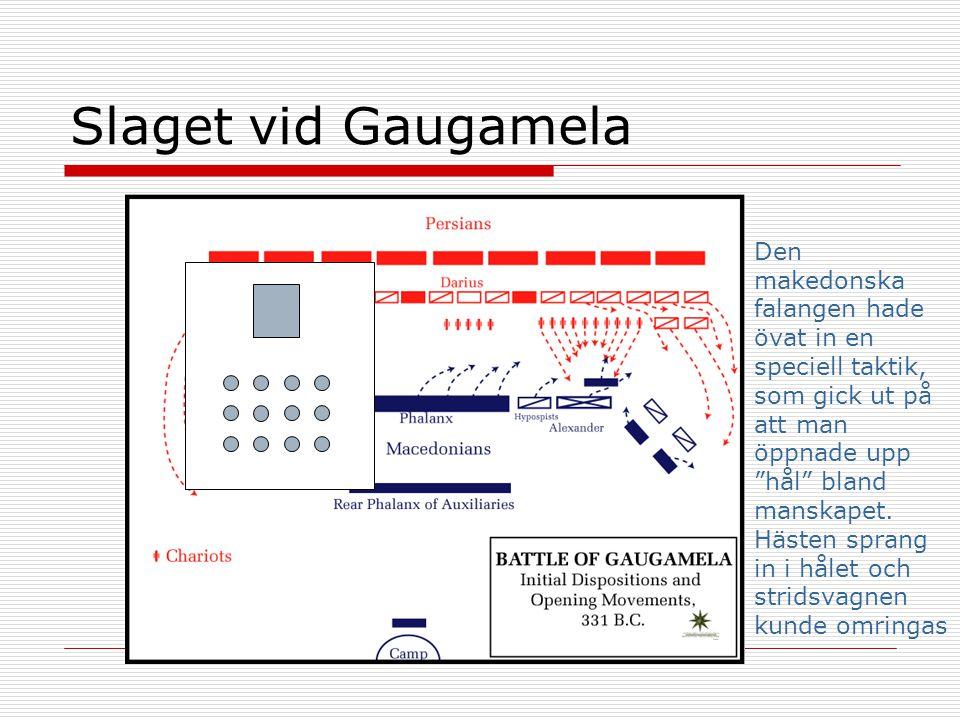 Slaget vid Gaugamela Den makedonska falangen hade övat in en speciell taktik, som gick ut på att man öppnade upp hål bland manskapet.