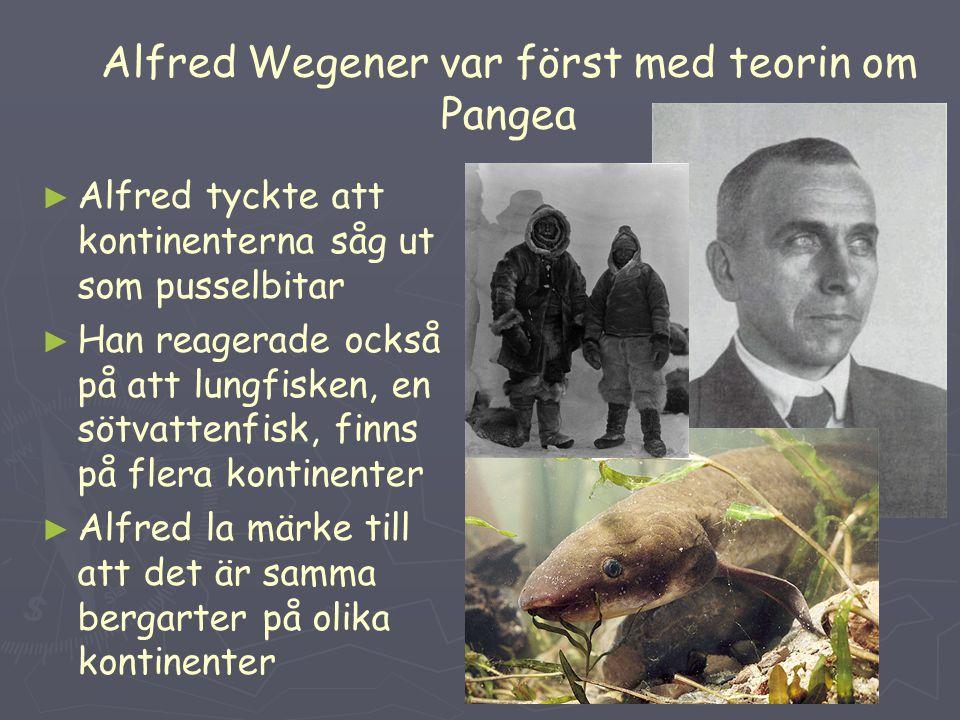 Alfred Wegener var först med teorin om Pangea ► ► Alfred tyckte att kontinenterna såg ut som pusselbitar ► ► Han reagerade också på att lungfisken, en sötvattenfisk, finns på flera kontinenter ► ► Alfred la märke till att det är samma bergarter på olika kontinenter