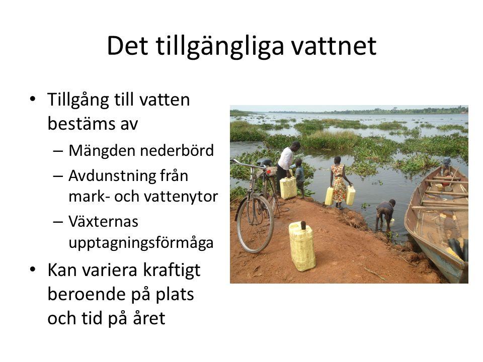 Det tillgängliga vattnet Tillgång till vatten bestäms av – Mängden nederbörd – Avdunstning från mark- och vattenytor – Växternas upptagningsförmåga Ka