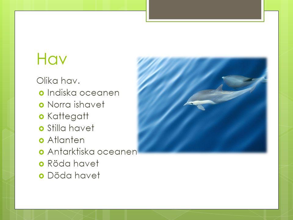 Hav Olika hav.  Indiska oceanen  Norra ishavet  Kattegatt  Stilla havet  Atlanten  Antarktiska oceanen  Röda havet  Döda havet