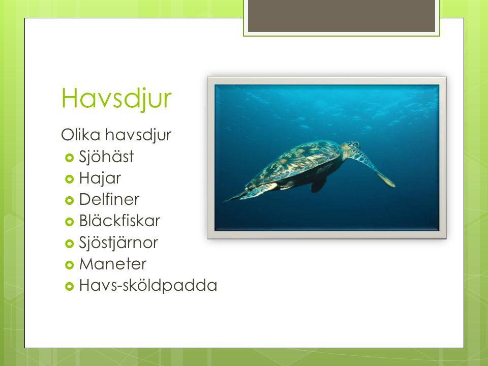 Havsdjur Olika havsdjur  Sjöhäst  Hajar  Delfiner  Bläckfiskar  Sjöstjärnor  Maneter  Havs-sköldpadda