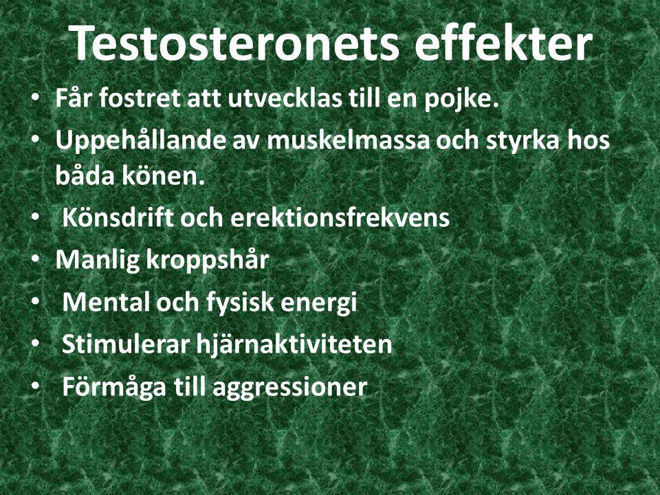 Testosteronets effekter Får fostret att utvecklas till en pojke. Uppehållande av muskelmassa och styrka hos båda könen. Könsdrift och erektionsfrekven