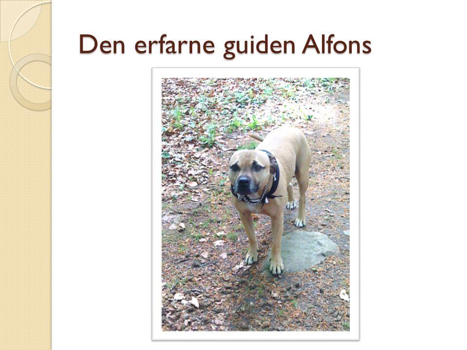 Den erfarne guiden Alfons