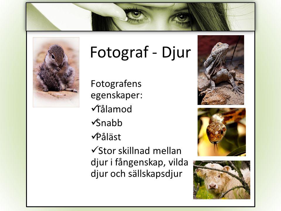 Fotograf - Djur Fotografens egenskaper: Tålamod Snabb Påläst Stor skillnad mellan djur i fångenskap, vilda djur och sällskapsdjur