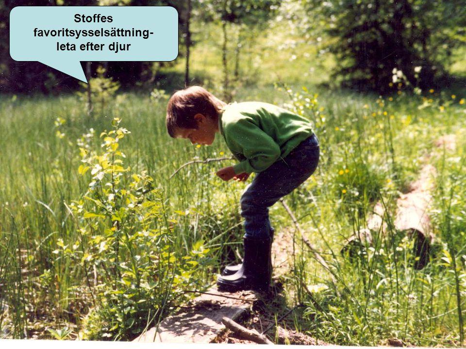Stoffes favoritsysselsättning- leta efter djur