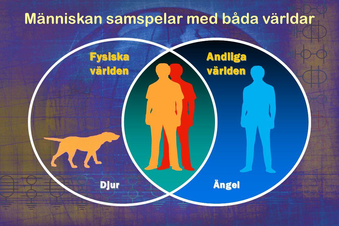 Människan samspelar med båda världar Fysiska världen Andliga världen DjurÄngel