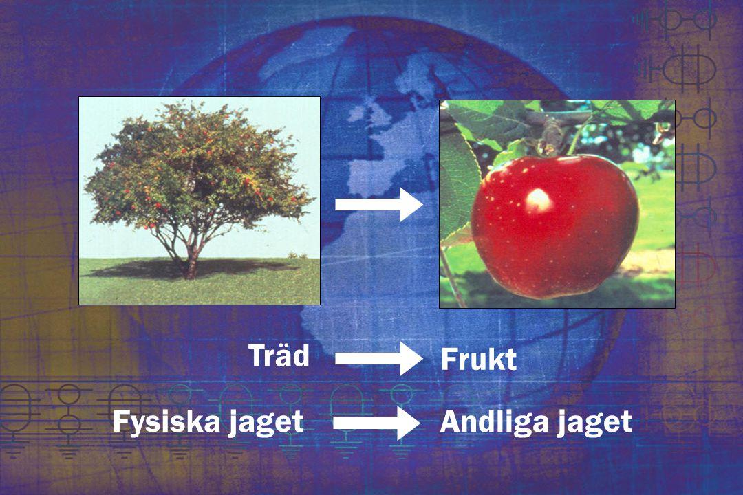 Träd Frukt Andliga jagetFysiska jaget