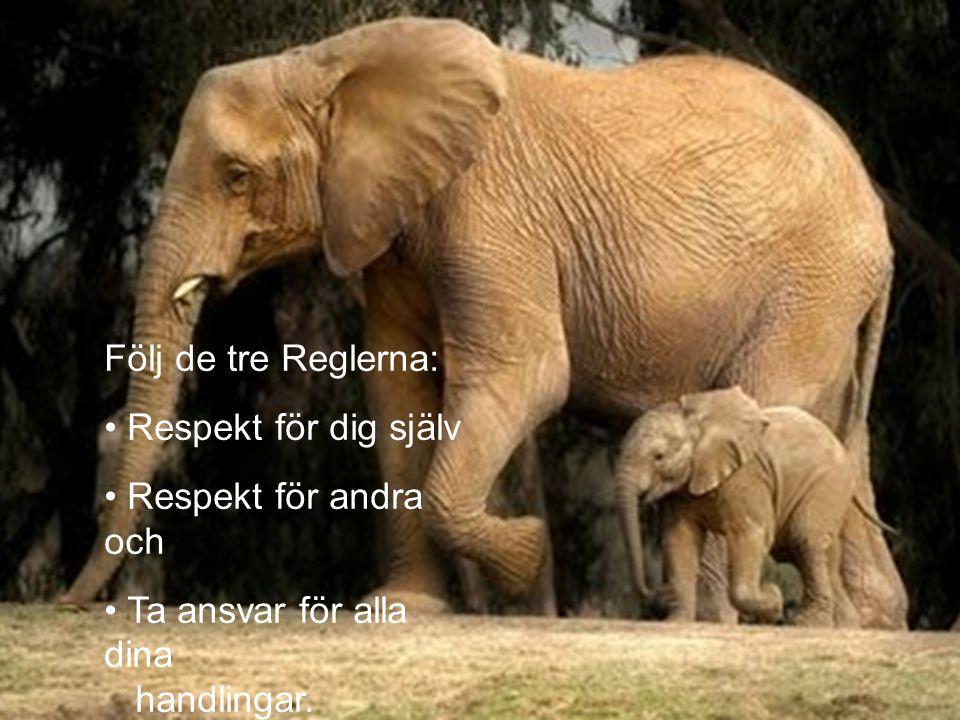 Följ de tre Reglerna: Respekt för dig själv Respekt för andra och Ta ansvar för alla dina handlingar.