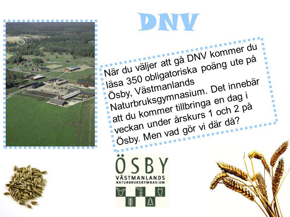 När du väljer att gå DNV kommer du läsa 350 obligatoriska poäng ute på Ösby, Västmanlands Naturbruksgymnasium.