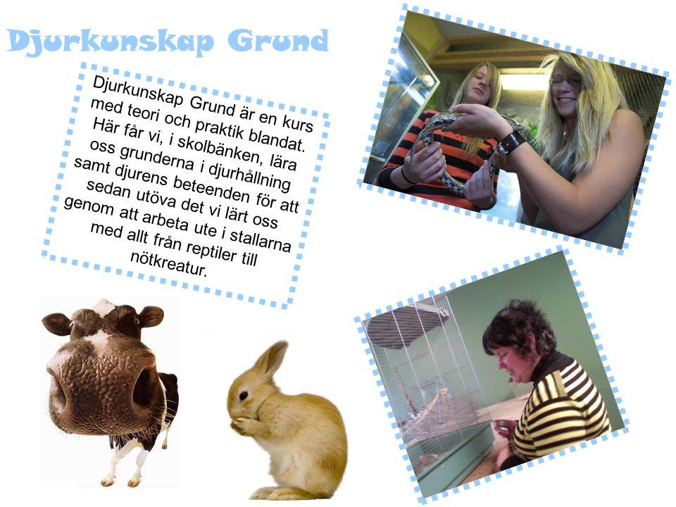 Djurkunskap Grund Djurkunskap Grund är en kurs med teori och praktik blandat.
