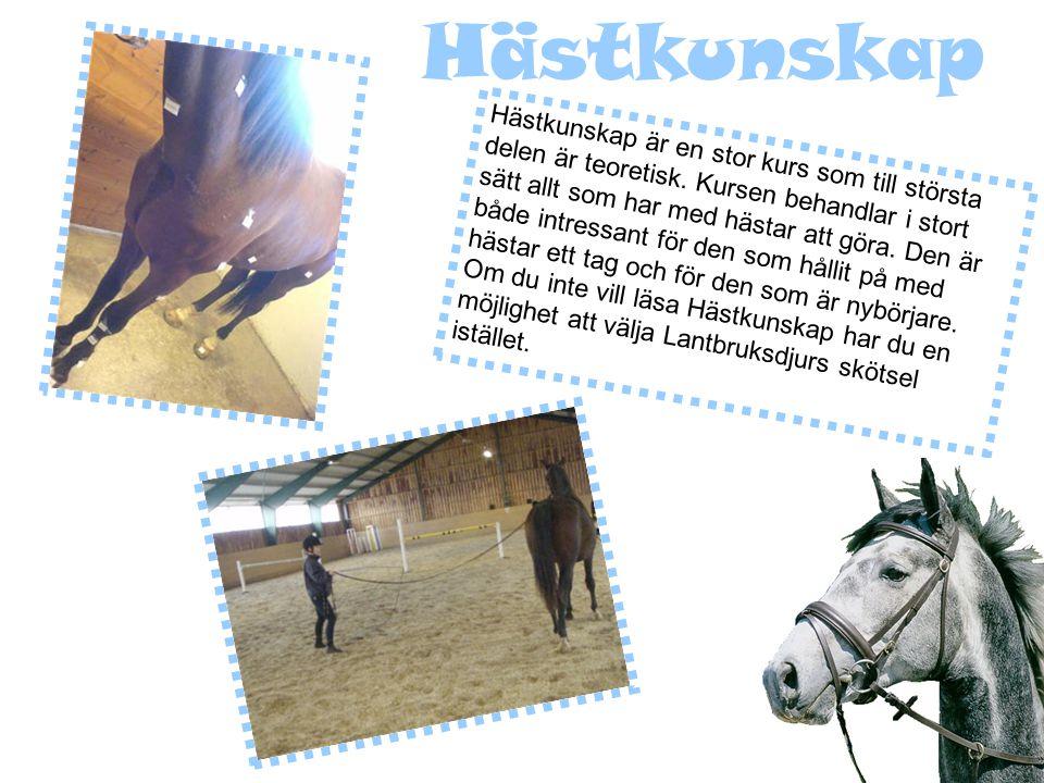 Hästkunskap Hästkunskap är en stor kurs som till största delen är teoretisk.