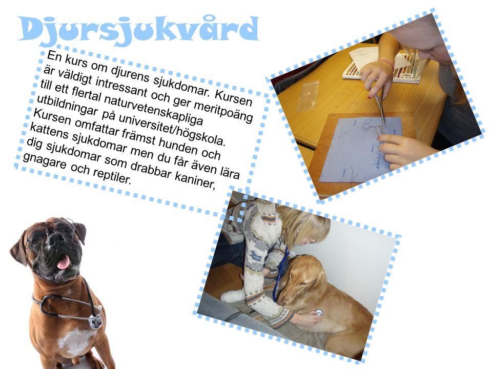 Djursjukvård En kurs om djurens sjukdomar.