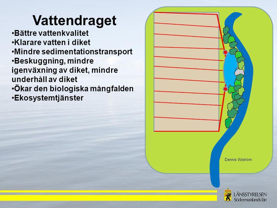Dennis Wiström Vattendraget Bättre vattenkvalitet Klarare vatten i diket Mindre sedimentationstransport Beskuggning, mindre igenväxning av diket, mindre underhåll av diket Ökar den biologiska mångfalden Ekosystemtjänster