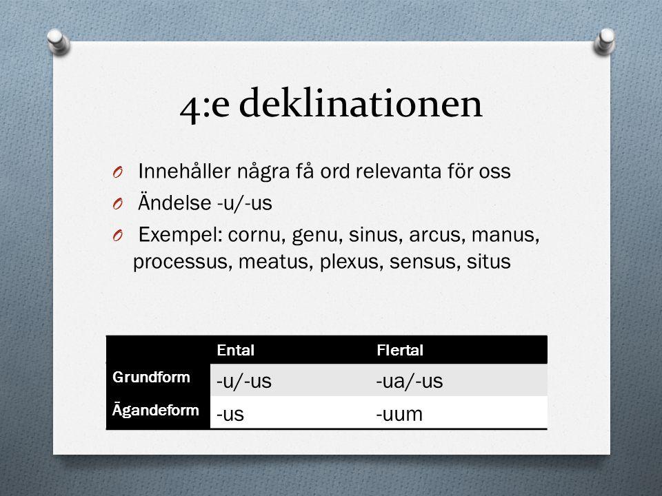 4:e deklinationen O Innehåller några få ord relevanta för oss O Ändelse -u/-us O Exempel: cornu, genu, sinus, arcus, manus, processus, meatus, plexus,