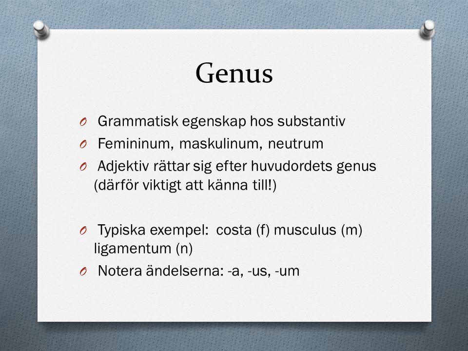 Genus O Grammatisk egenskap hos substantiv O Femininum, maskulinum, neutrum O Adjektiv rättar sig efter huvudordets genus (därför viktigt att känna ti